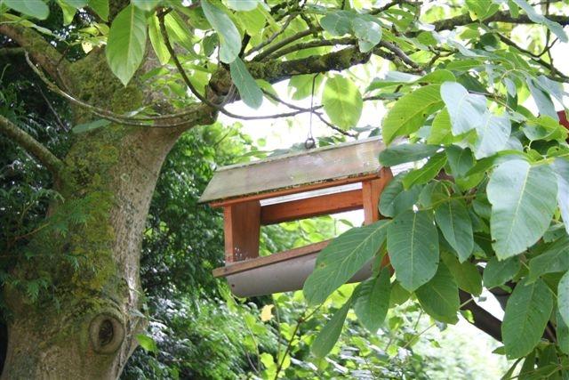 De voederbak in de walnotenboom